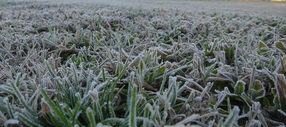 cosecha invierno helada