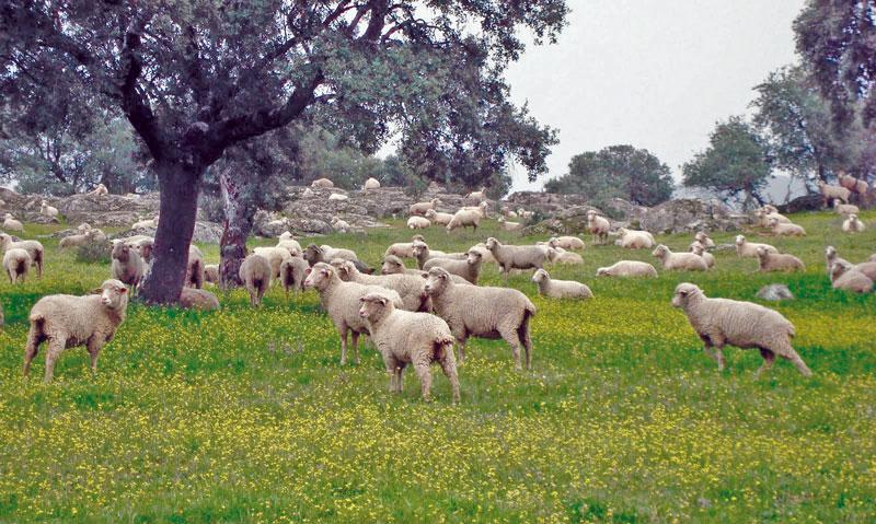 Pastoreo en campos Gestoría Patrial